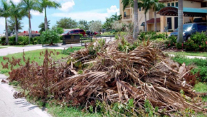 yard waste removal CT